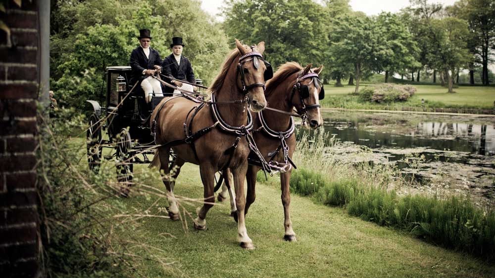 Horse and Wagon Riding