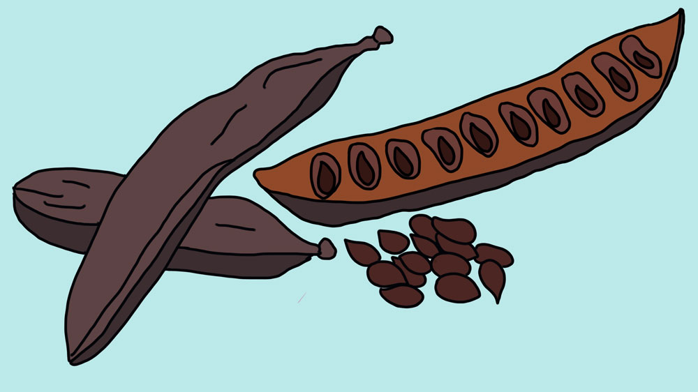 Carob and Carob Seeds